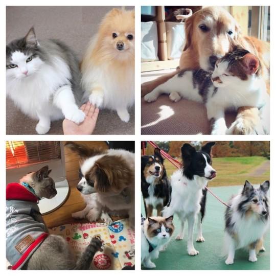 仲良しすぎて癒される❤犬&猫7選