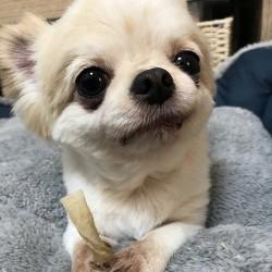 つぶらな瞳で見つめてくる…♥可愛すぎる犬ちゃん5選