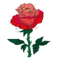 【花星人】10/23〜11/20は「雨星人にうまく扱われないよう注意して!」イヴルルド遙華のネイチャーサイン占い