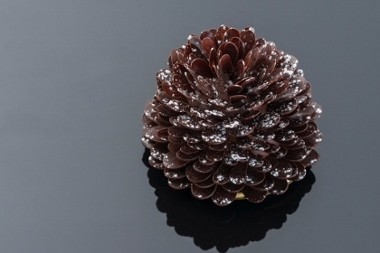 Pinecone (420x280) (380x253)
