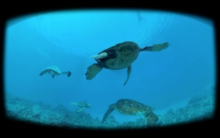 turtle (430x269)